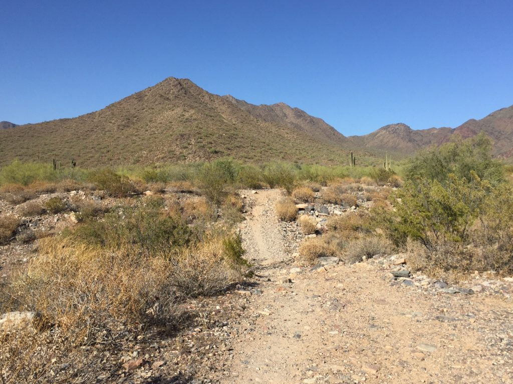 One of the few dips in terrain along the Levee Trail in the McDowell Sonoran Preserve