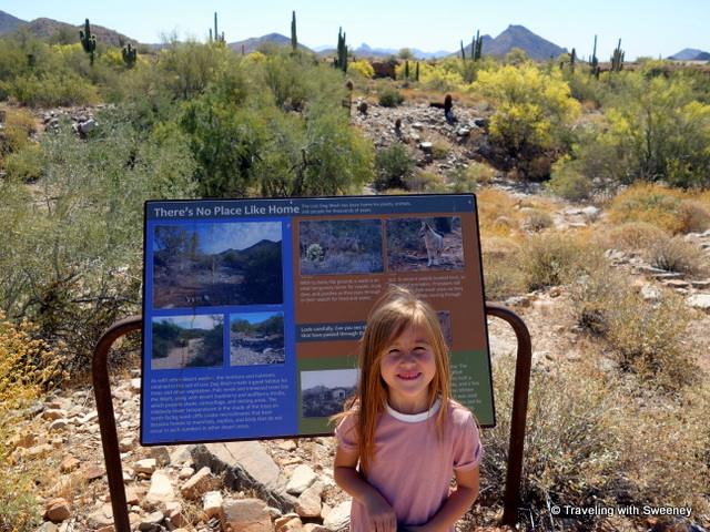 Getting a Sonoran Desert education on the Kovach Family Nature Trail