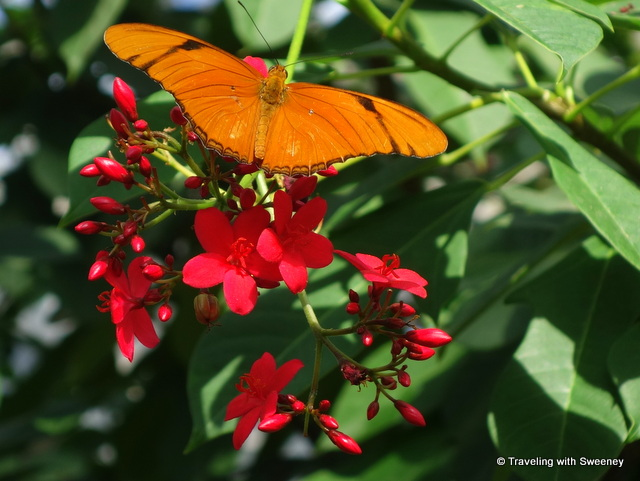 Gorgeous orange butterfly enjoying the flora at Butterfly Wonderland